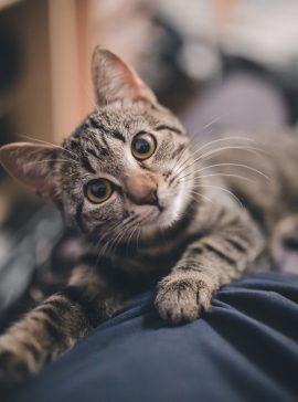 Cat vet care in Athlone, Moate, Kilbeggan and Clara